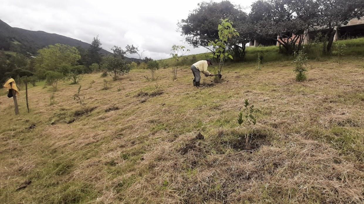 Mantenimiento de árbolado