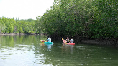 Half-Day Mangrove Tour with Sea Cave Kayaking at Koh Talabeng
