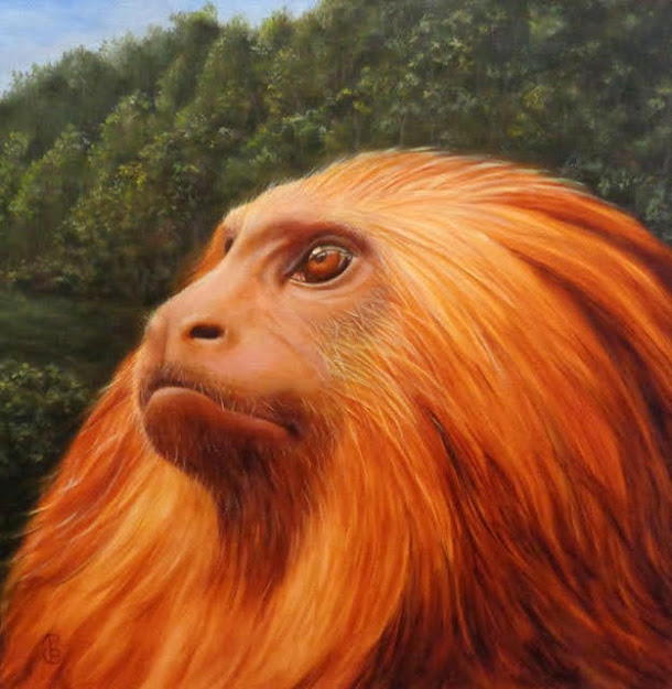 Golden Lion Tamarin Oil Painting by Pam Blevens