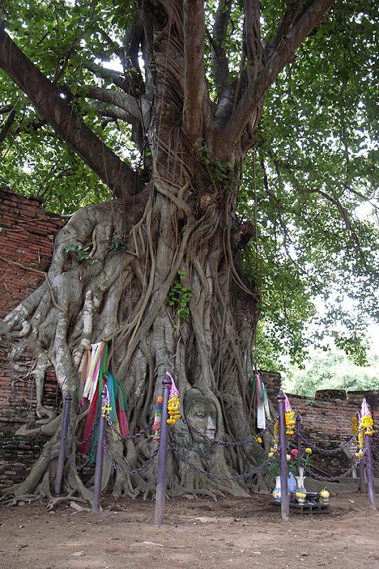 2007092008 - Ayutthaya(Wat Phra Mahathat)