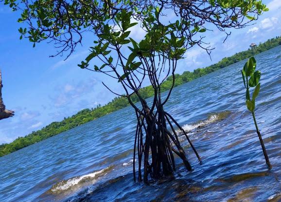 Madol Duwa Island