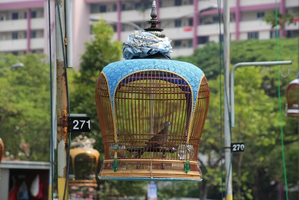 Kebun Baru, clube de pássaros canoros em Cingapura