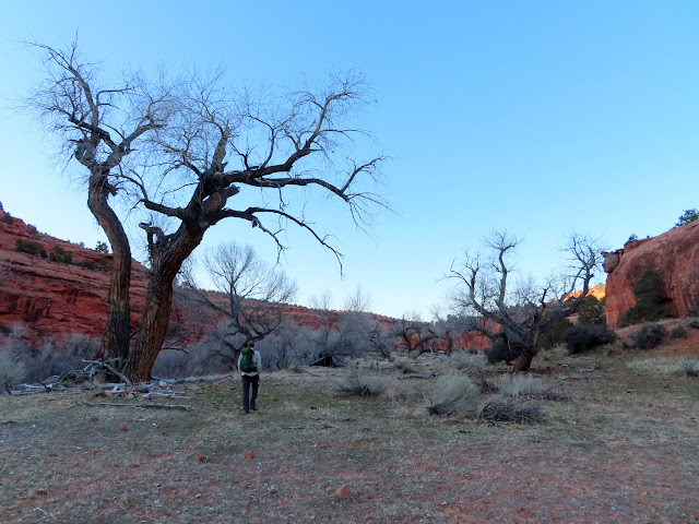 Hiking past bare cottonwoods above the watercourse