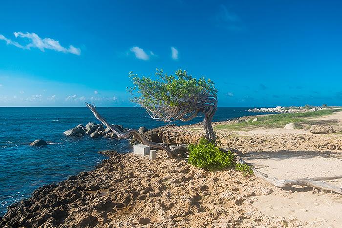 Copac, Aruba