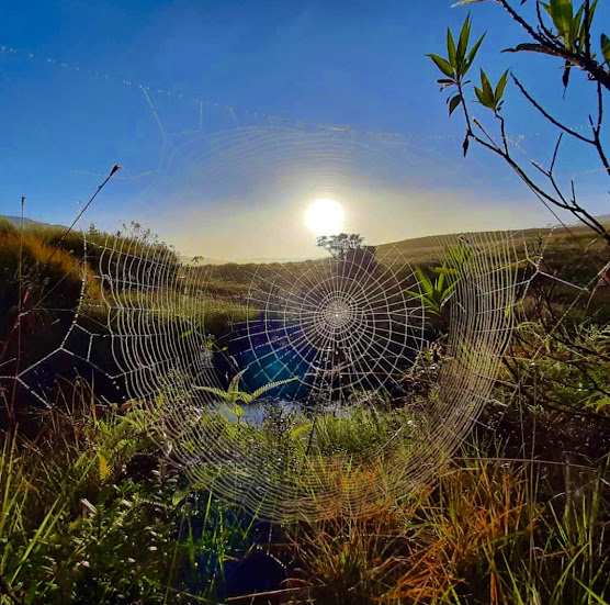Gawarawila Plains