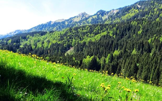 Straße zur Buhls Alpe Gunzesried Naturpark Nagelfluhkette Allgäu