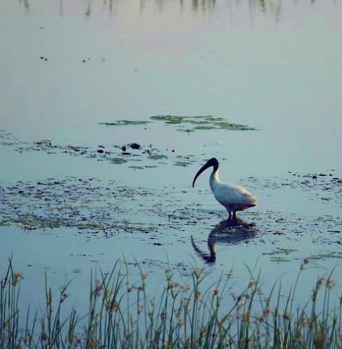 Tabbowa Lake
