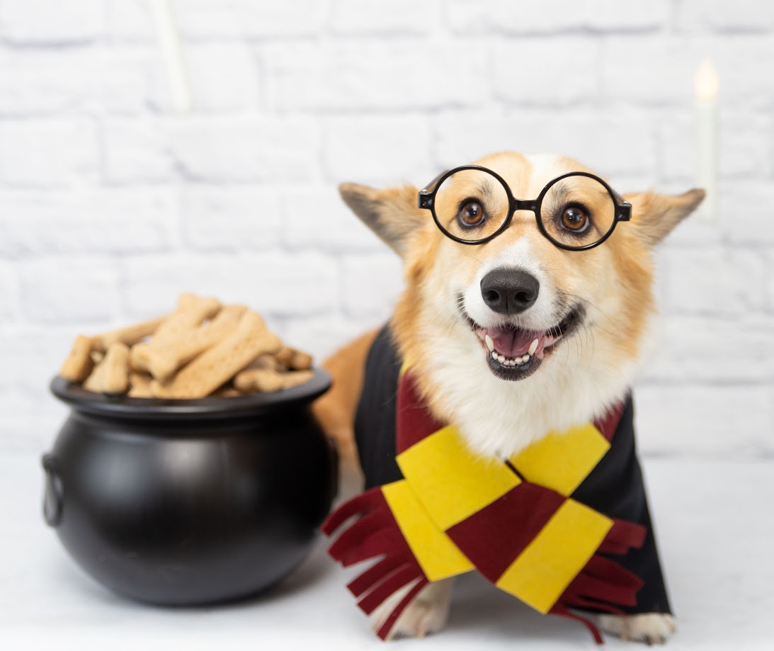 Treats are essential on or off camera. This Harry Pawter Barkday party plan is featured in the book: Life's a Puppy Party.
