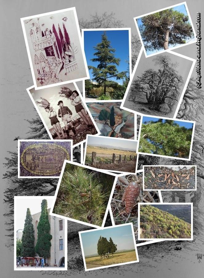 Hvoinie-collage-a