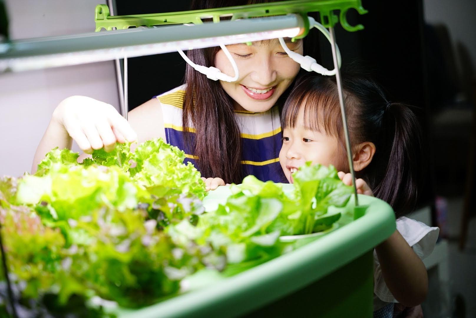 【綠色潮流】Lagoon Vish 家庭式魚菜共生 居家最美綠意  輕鬆打造環保健康的綠生活