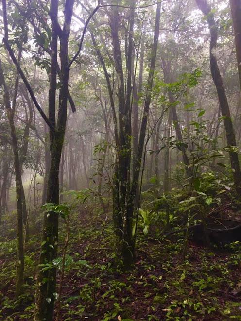 Forest Hill Tea