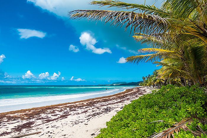 Plaja Rincon, Republica Dominicană