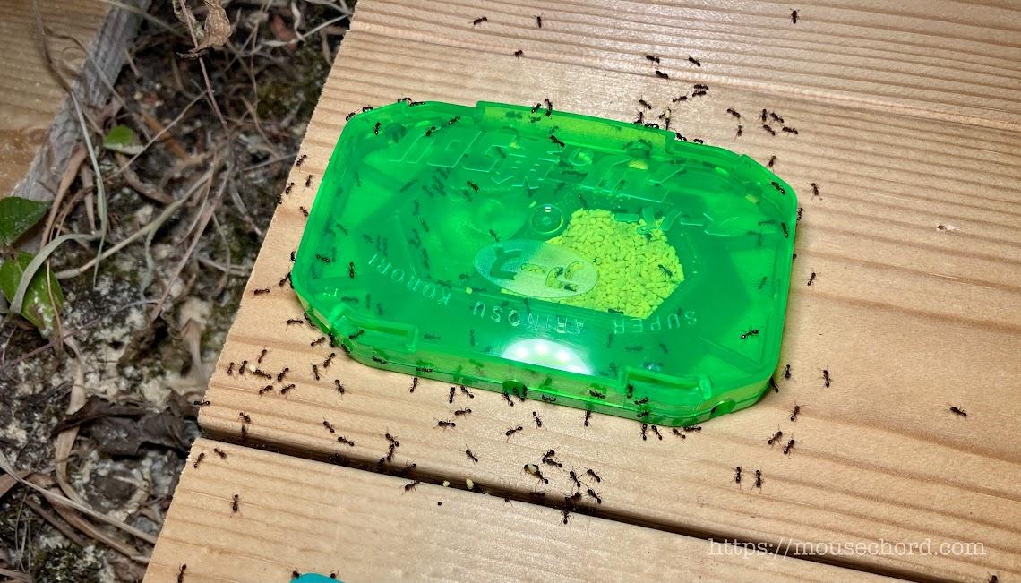 アース製「アリの巣コロリ」の威力がすごいぞっ!