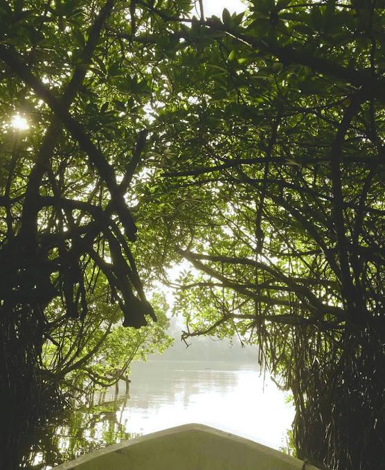 Madu River Safari