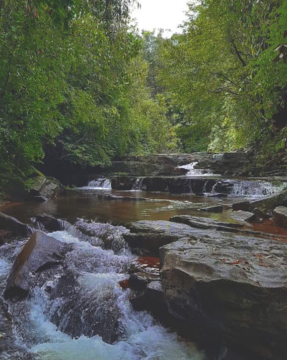 Makandawa Rain Forest