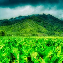 Kauai by Fabienne Lawrence - Uncategorized All Uncategorized ( mountain, winger, green, kauai, landscape )