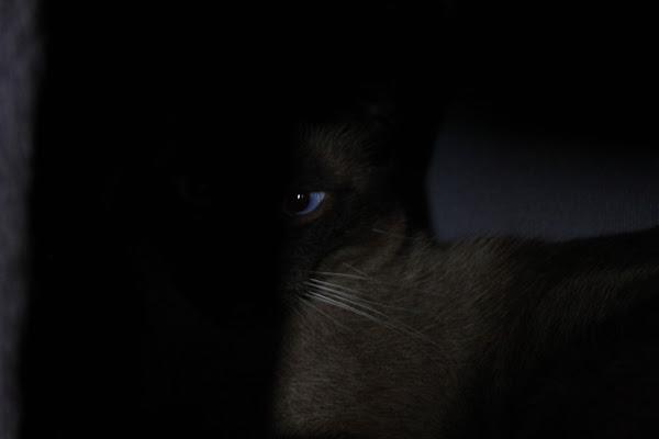 occhio... di AlexSandra