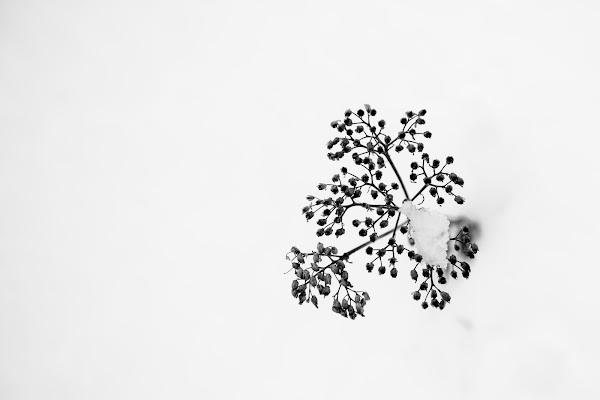 Nel candido.... di Matteo Faliero