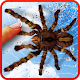 Spider, live wallpaper Apk