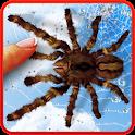 Spider, live wallpaper icon