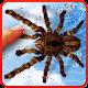 Spider, live wallpaper Download on Windows