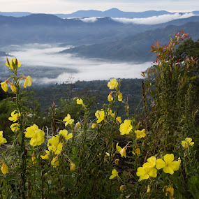yellow flower on top by Khairi Went - Landscapes Mountains & Hills ( amazing, gayoland, aceh, mountain, indonesia, forest, yellow, morning, landscape, misty, flower,  )