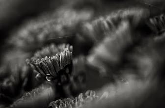 Photo: #macromonday  curated by  +Jennifer Eden+Jake Easley+Kerry Murphy+Kelli Seeger Kim #monochromeartyclub  #bwphotography   #monochromemonday  curated by +Hans Berendsen+Jerry Johnson +Steve Barge+Dominique Hilbert+Martin Heller+David Orr