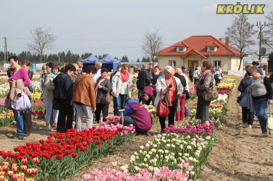 Międzynarodowe Targi Tulipanów 2016