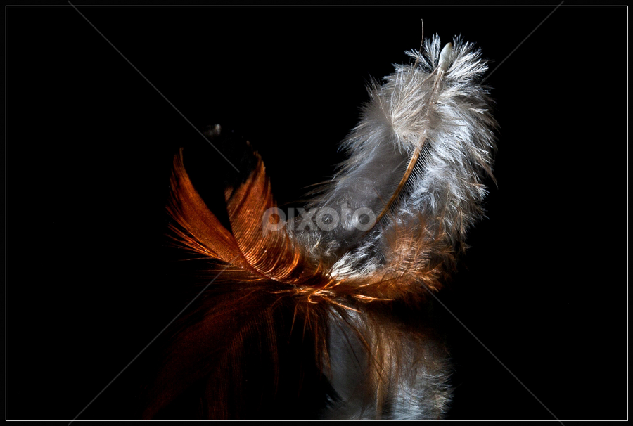 The Feather by Rudi Kleynhans - Artistic Objects Other Objects