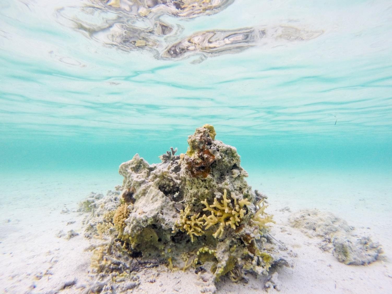 Obraz zawierający zewnętrzne, woda, przyroda, rafa  Opis wygenerowany automatycznie