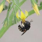 """Buzz bee"""