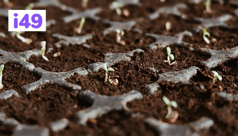 choose-your-cannabis-seed-and-start-germination