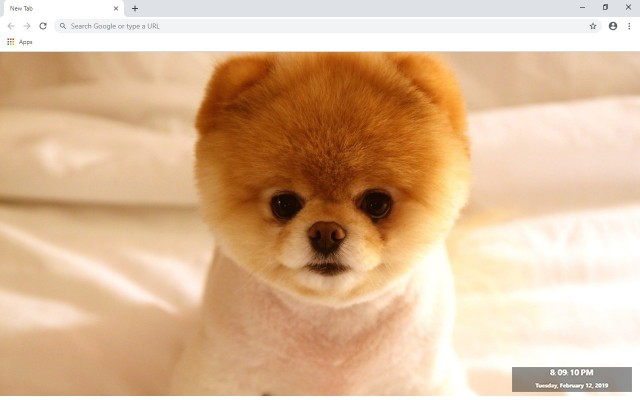 Dogs New Tab & Wallpapers Collection