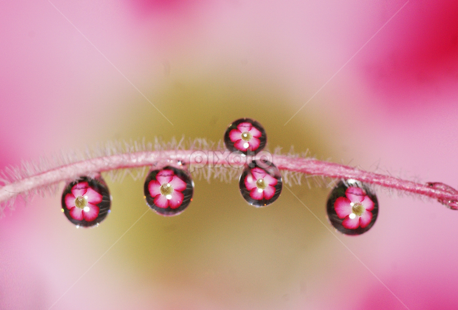 Floral Drops..... by Aroon  Kalandy - Abstract Water Drops & Splashes