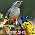 Canto de Pássaros Brasileiros icon