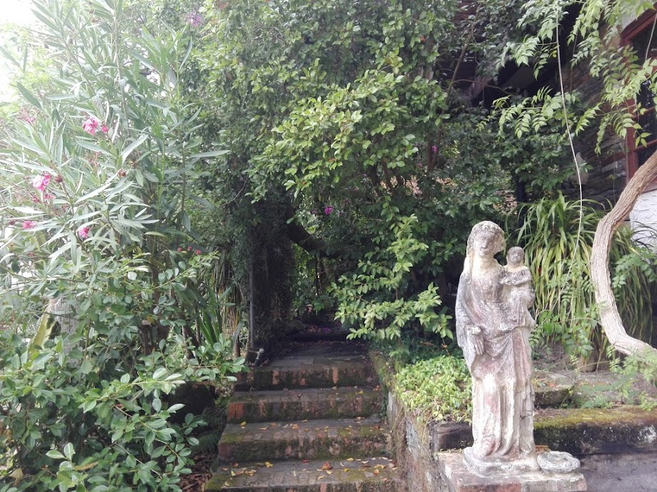 Foto Jardín botánico Fundación Sales 16