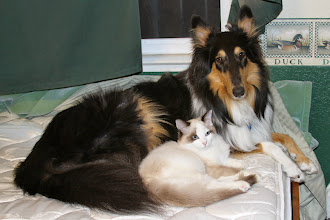 Photo: I found them sleeping together. BFFs