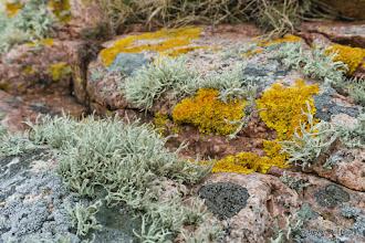Photo: Lichens at Buchan Ness, Boddam