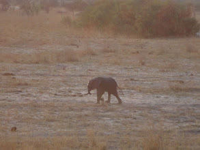 Photo: This little baby elephant (about six months old) is sooooo cute. Our guide says he's sick and dehydrated, sad :(