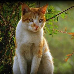 by Jagadeesh Mummigatti - Animals - Cats Portraits