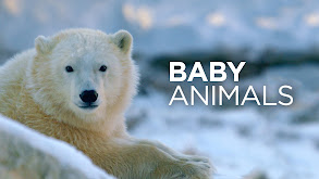 Baby Animals thumbnail