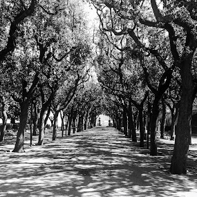 Castle Park at Lunchtime  by Ginny Serio - Black & White Street & Candid ( # offseasontraveller,  )