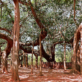 Tree by Anup Kumar Adhikari - Nature Up Close Trees & Bushes