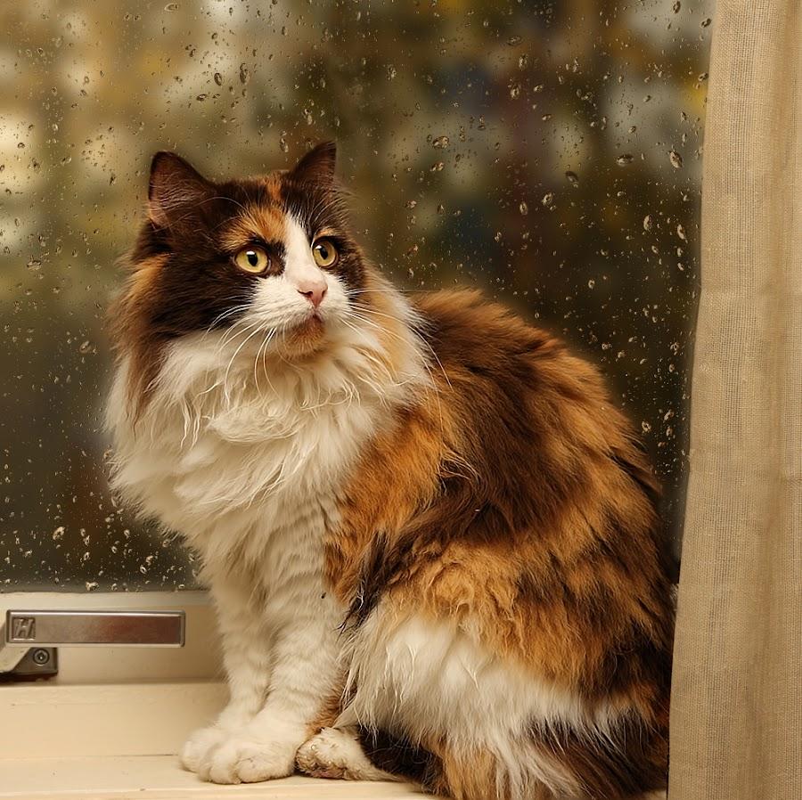by Jane Bjerkli - Animals - Cats Portraits ( , pwc84 )