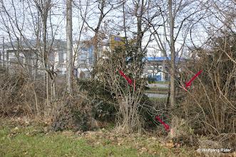 Photo: Markierungen im Grüngürtel entlang der Pragstraße B 10 gegenüber Aral-Tankstelle