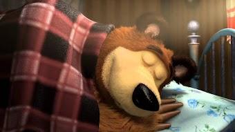 Kein Winterschlaf für den Bären