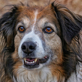 Treat Please! by Twin Wranglers Baker - Animals - Dogs Portraits