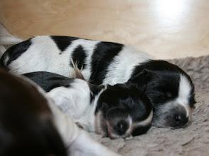Photo: ein Stilbild :) Satt, zufrieden, warm und kuschelig - so darf es gern bleiben, wenn es nach Erna und Ellie geht