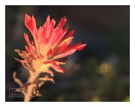 Photo: Eastern Sierras-20120715-296