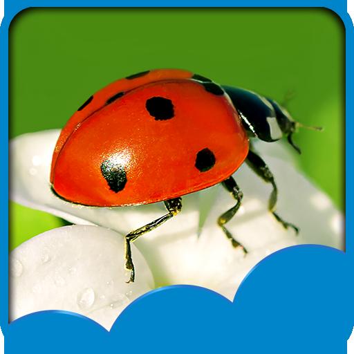 Bubamara Pozadinske Slike Aplikacije Na Google Playu